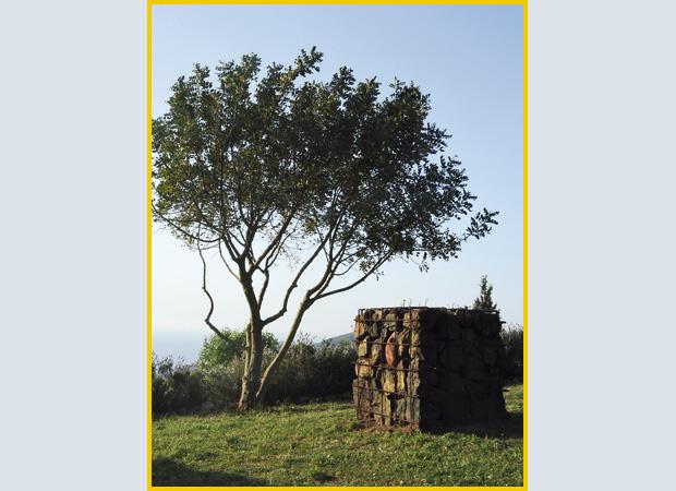 orto-botanico-elba_03