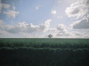 I campi vicino a Illiers-Combray percorsi dal vento: i luoghi dove Proust da ragazzino trascorse con la famiglia le vacanze estive erano a Illiers, ma nel romanzo diventano Combray. Proprio qui nella casa della zia scopre il potere delle madeleine. Nel 1971 furono ribattezzati Illiers-Combray, in occasione del centenario della nascita dello scrittore francese