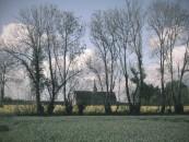 Filari di alberi nei dintorni di Cabourg-Balbec, uno dei luoghi dell'anima evocati da Proust