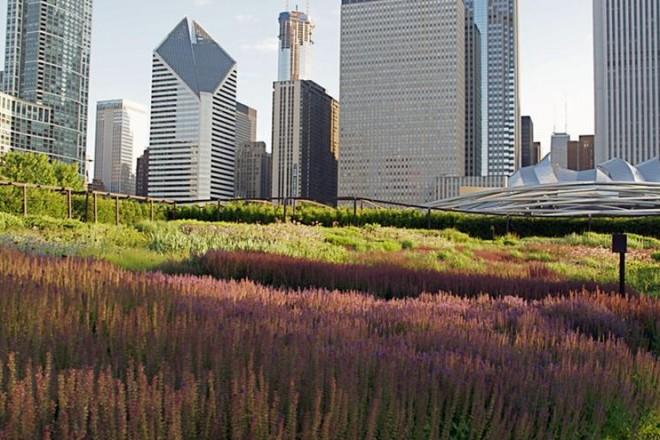 Dalla High Line di New York al Giardino delle Tese alla Biennale di Venezia. Esce in Italia il libro dedicato a uno dei più grandi paesaggisti contemporanei