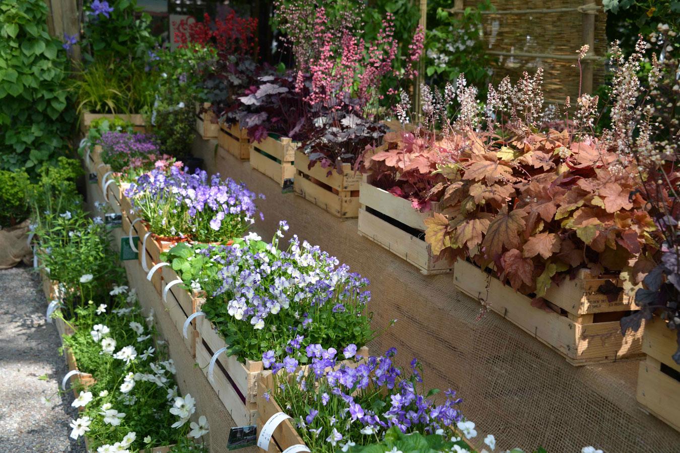 Orticola 2014 fiori e piante a milano for Catalogo piante e fiori