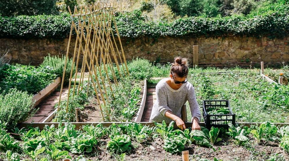 Organic Kitchen Garden, Villa Lena - Image Credit Ellie Tsatsou - Copy