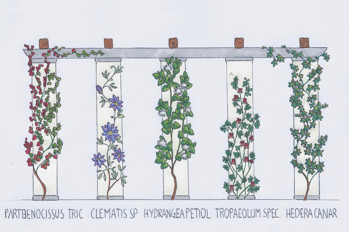 Come scegliere le piante giuste per un pergolato foto 1 for Piante da frutto rampicanti
