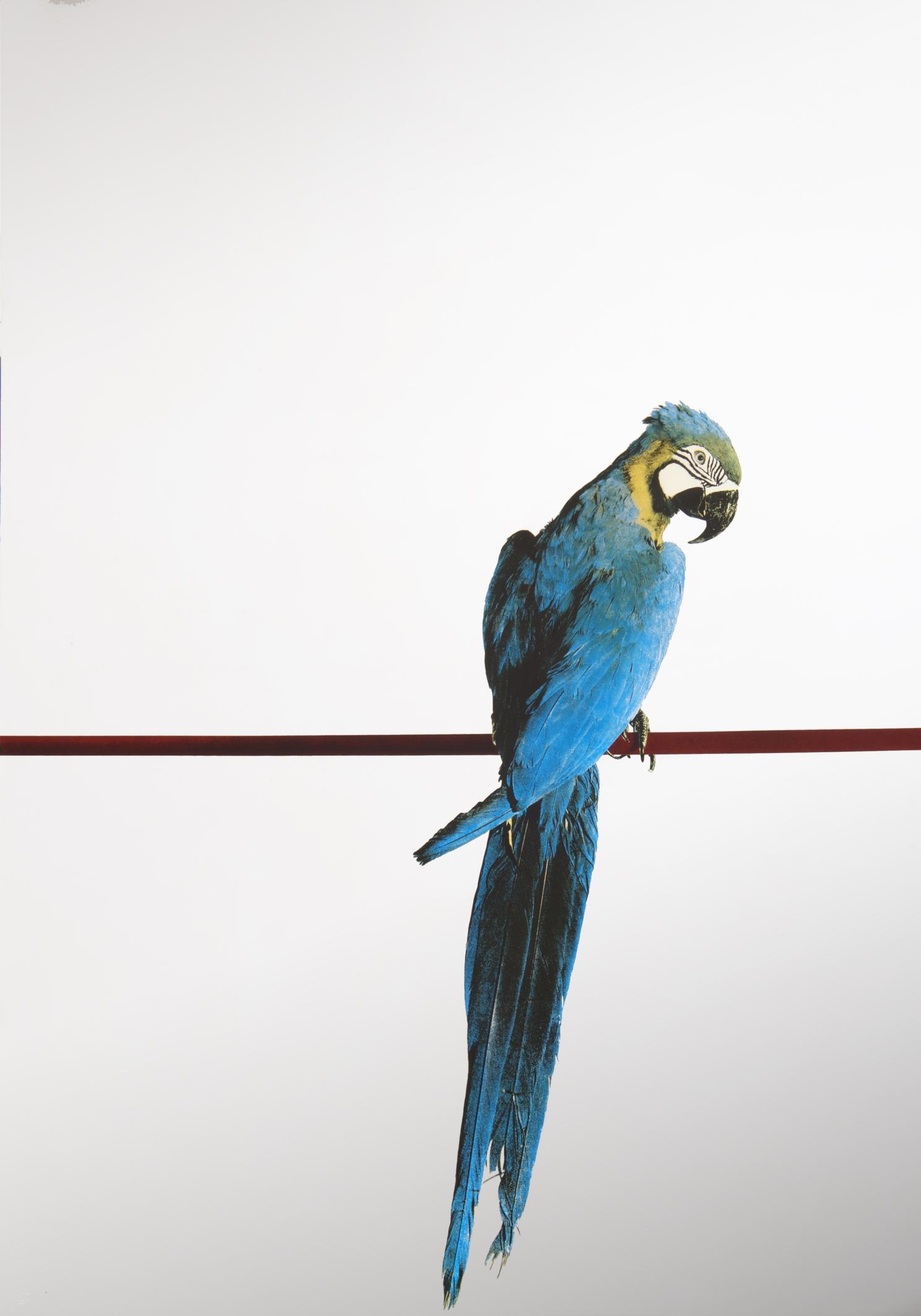 Arte fiera a bologna la mostra dedicata all 39 arte - Serigrafia su specchio ...