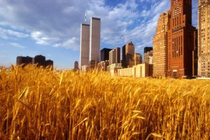 Wheatfield - A Confrontation. Un'opera dell'estate 1982 di Agnes Denes. Due acri di frumento piantato e in seguito raccolto in Battery Park