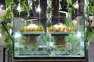 L'installazione-prototipo Jellyfish Farm sfrutta il processo di desalinizzazione dell'acqua marina per la coltivazione di orti galleggianti