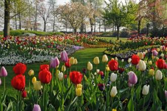 Il Parco Keukenhof: qui ha luogo ogni primavera  lo spettacolo di fioritura in assoluto più importante del mondo. Si trova vicino alla cittadina di Lisse