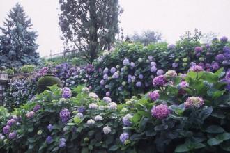 In giardino. Appassionatamente