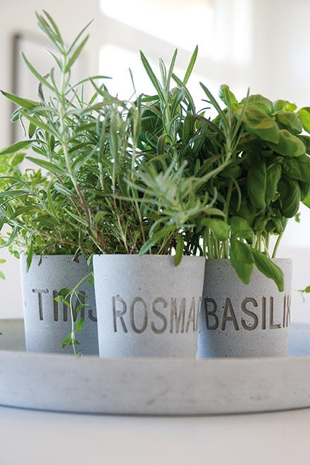 piante-aromatiche-in-vaso-1