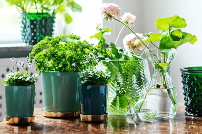 Vasi Piante Aromatiche.Piante Aromatiche In Vaso Per La Cucina Living Corriere