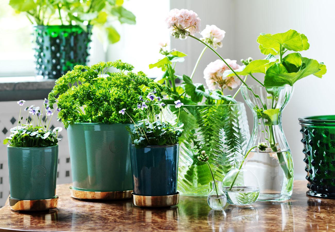 Pianta Simile Al Rosmarino piante aromatiche da coltivare in cucina - living corriere