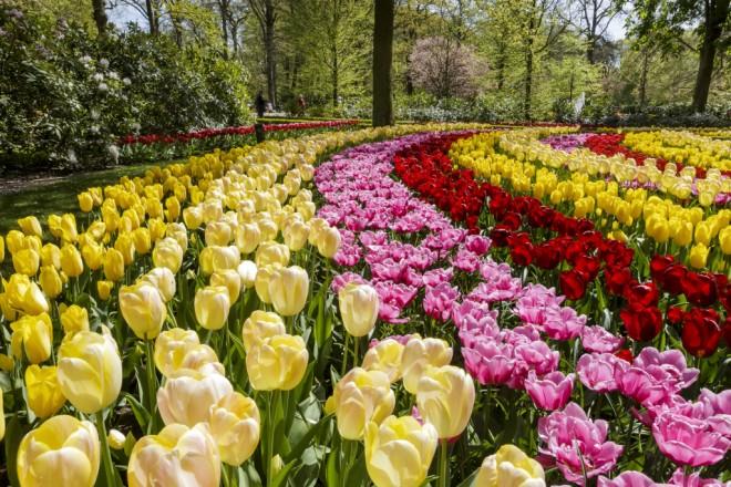 foto 1 Parco di Keukenhof, il regno dei tulipani