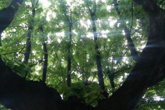 Progetto Foresta