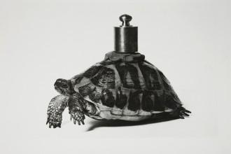 00_Claudio Abate (1943), senza titolo (Io non amo la natura di Vettor Pisani), 1970, gelatina bromuro d'argento, Galleria civica di Modena