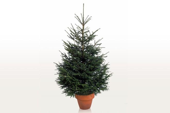 Casetta Di Natale Ikea : Alberi di natale ikea living corriere