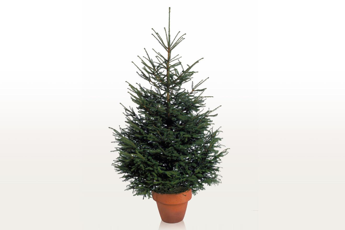 Albero Di Natale Ikea.Alberi Di Natale Ikea 2016 Living Corriere