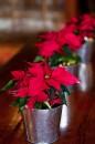 4. christmas4u.tumblr.com