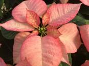 Foto Floricoltura Buriani