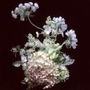 bouquet-flora-starkey-08