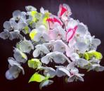 bouquet-flora-starkey-16