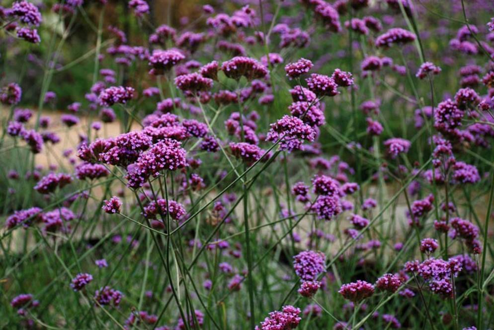 4. Lisa Cox Garden Designs