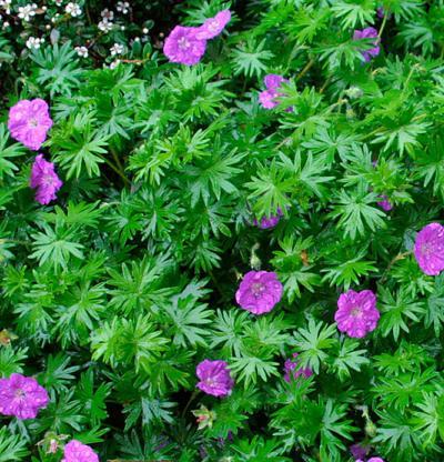 Piante e fiori del mese di agosto foto livingcorriere for Fiori di agosto