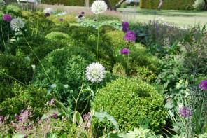 Le piante e i fiori di Novembre