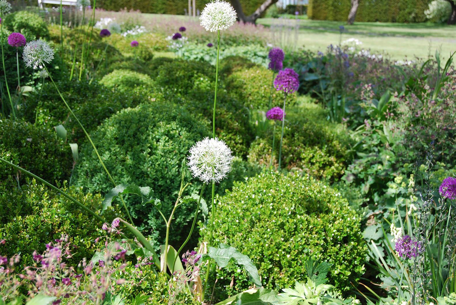 le piante e i fiori di novembre living corriere