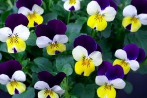 Piante e fiori di febbraio