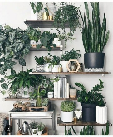 10 piante che arredano e purificano laria - Foto - Foto 1 ...