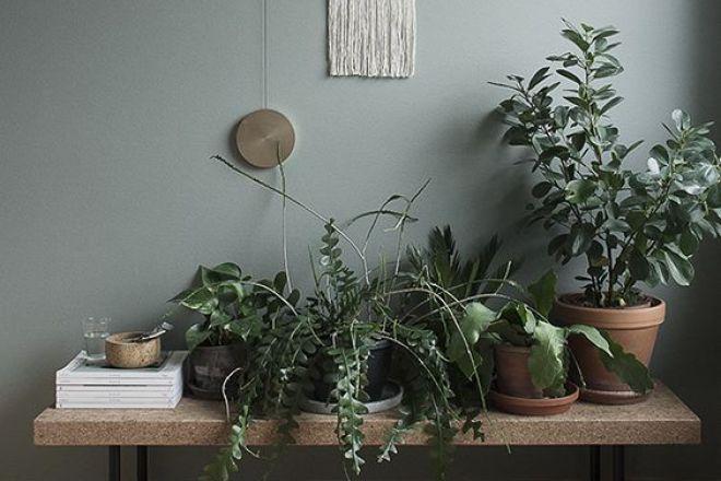 10 piante che arredano e purificano l aria livingcorriere - Piante che purificano l aria in casa ...