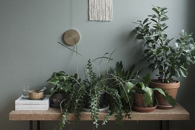 3.piante-purificano-aria-green wall