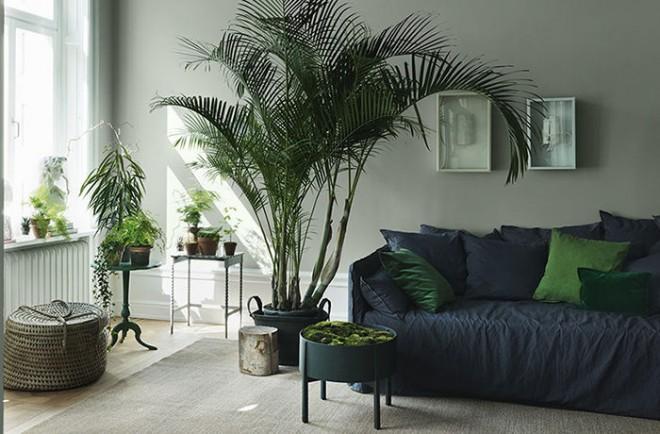 4.piante-purificano-aria-grande kenzia