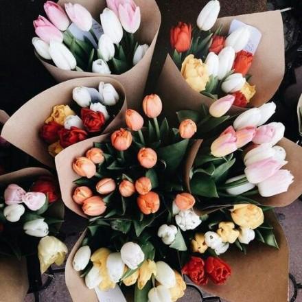 1. tulipani pinterest