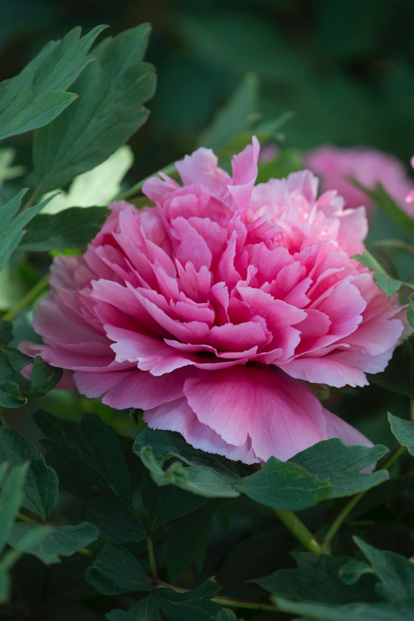 Immagini Piante E Fiori piante e fiori di maggio - foto - foto 1 livingcorriere