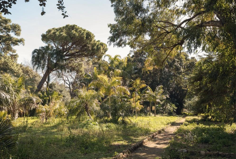 00_Orto Botanico_Manifesta 12 Palermo Atlas_Photo Delfino Sisto Legnani, 2017, courtesy OMA