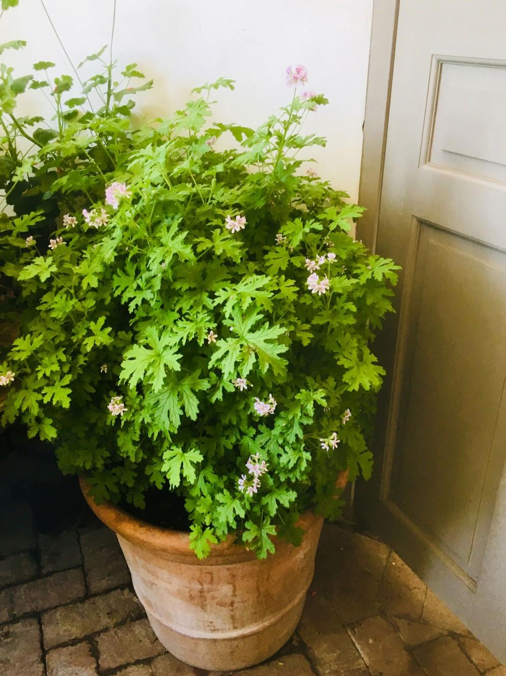 4.-Dr-Westerlund-piante-giugno-living-corriere