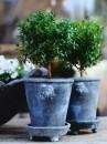 5. mirto su tavolo zetas trädgård-piante-giugno-living-corriere