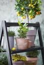 -piante-giugno-living-corriere