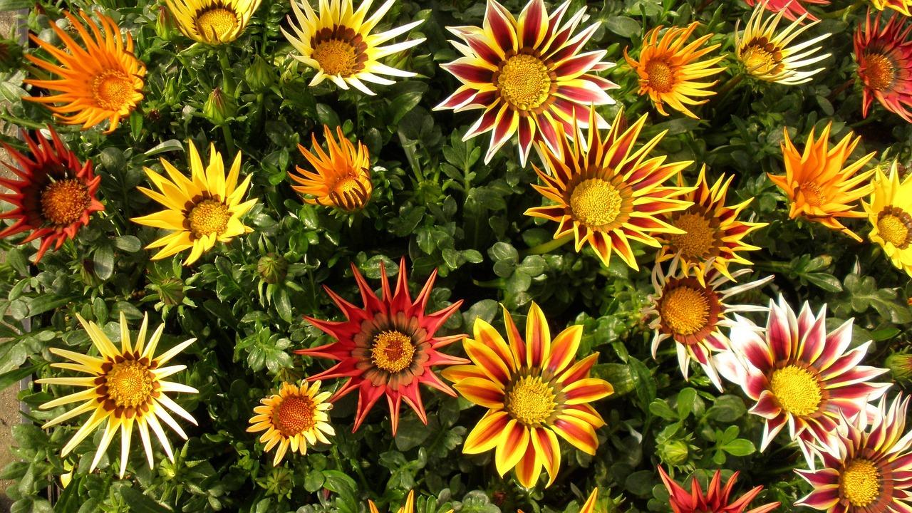 Piante e fiori di luglio livingcorriere for Piante e fiori