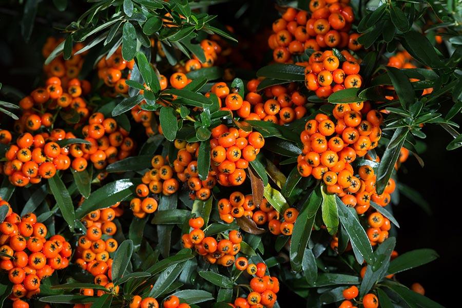 6. becattini piante