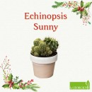 Echinopsis-sunny-Le-Georgiche-1