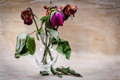 flower-316437_960_720