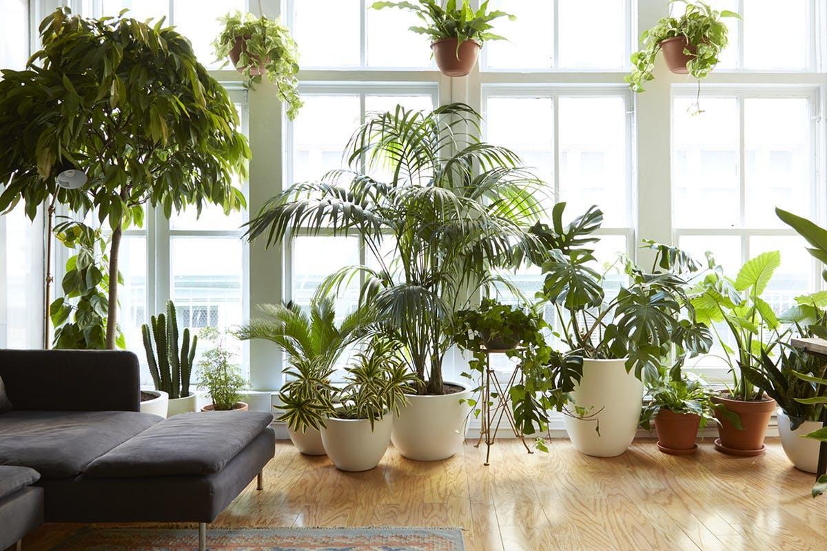 Pianta Da Ufficio Poca Luce piante da interni che resistono a tutto - livingcorriere