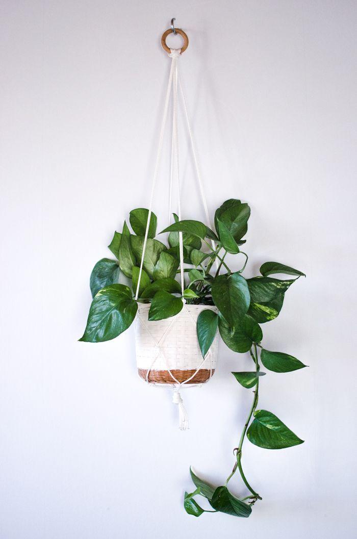 10 piante da appartamento che resistono a tutto - Foto