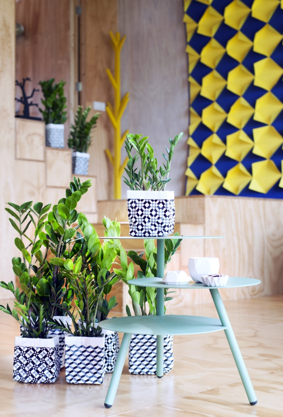 piante-resistenti-10.zamioculcas-planted-in-vases-of-geometric-pattern