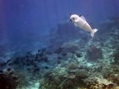 10.-SoFi-swimming-with-real-fish,-MIT-CSAIL