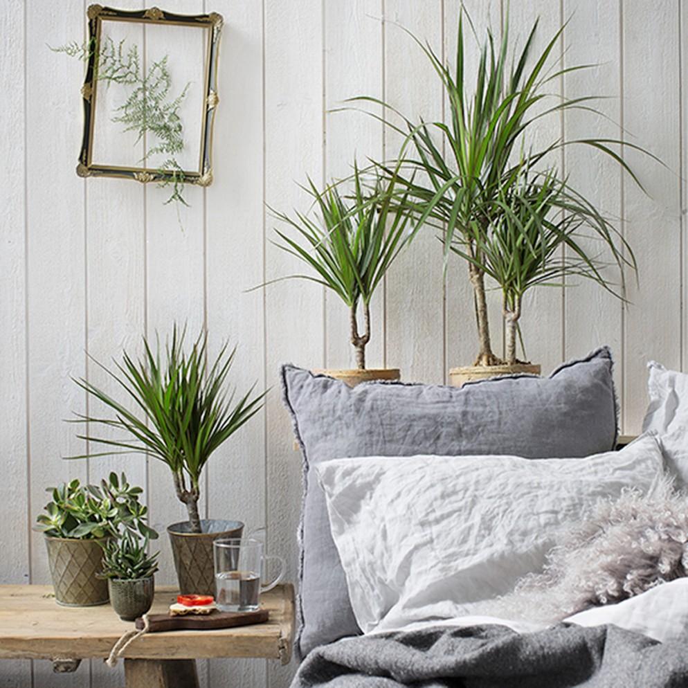 10 piante che tutti dovrebbero avere in camera da letto ...