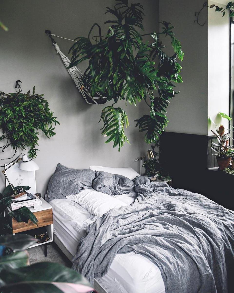 piante-in-camera-da-letto-4