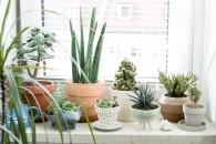 1.intro-HappyInteriorBlog-piante-grasse